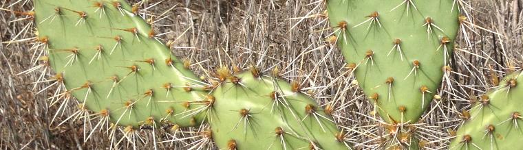 Websites For Ecological Data